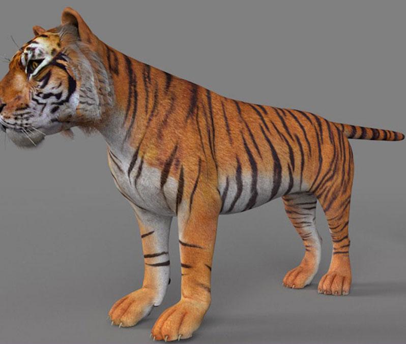 毛色浅黄棕黄色猫科陆生动物老虎C4D模型