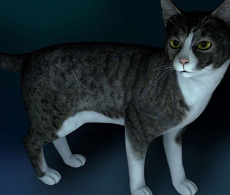 陆生动物宠物小花猫中华狸猫C4D模型