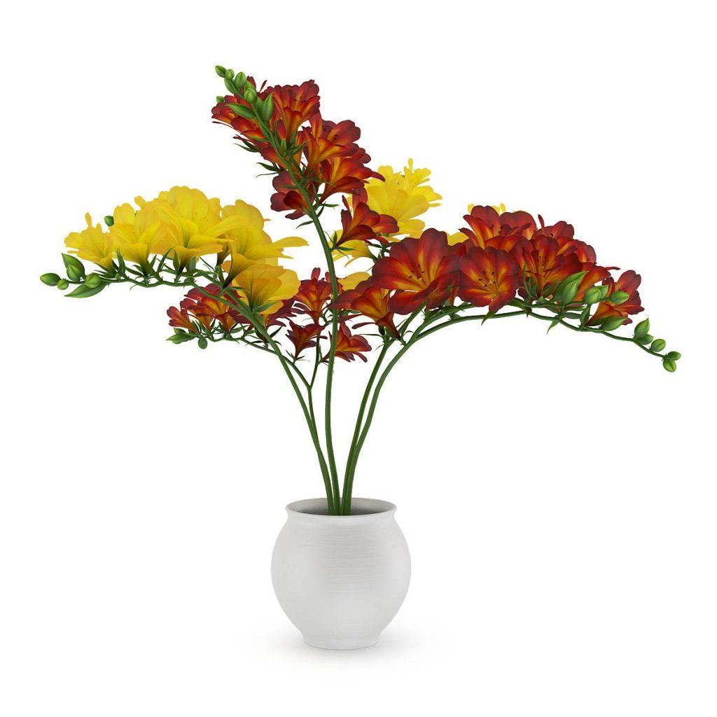 盆栽花香雪兰C4D模型