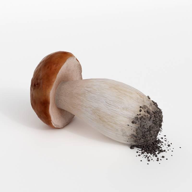 蘑菇蔬菜香菇C4D模型
