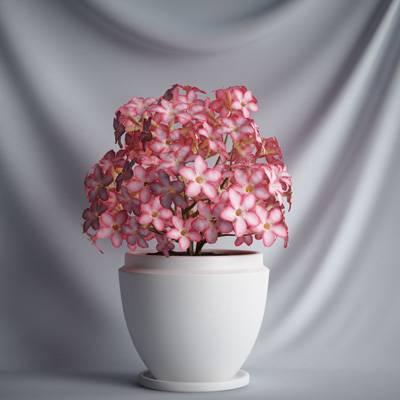 盆栽花植物C4D模型