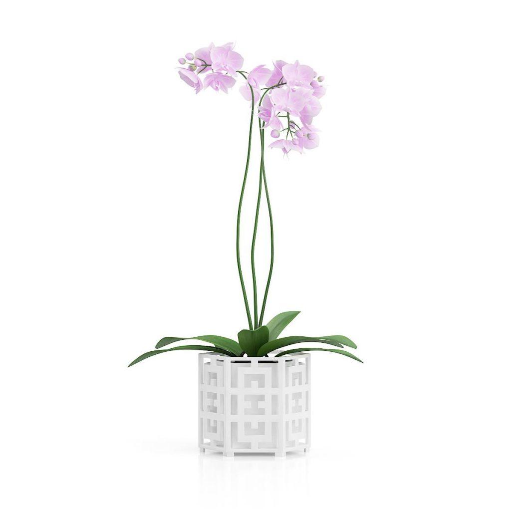 景观装饰盆栽植物花C4D模型
