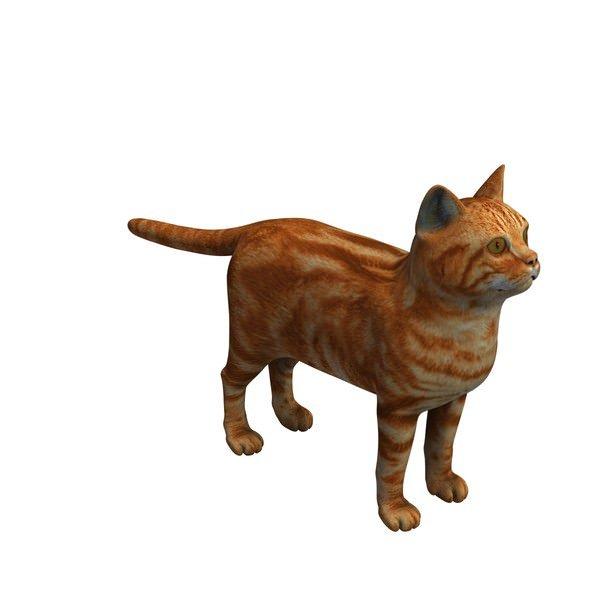 动物猫中华狸猫3D模型