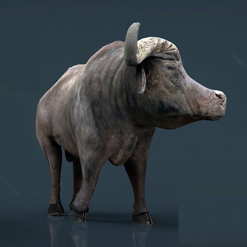 动物模型非洲水牛模型