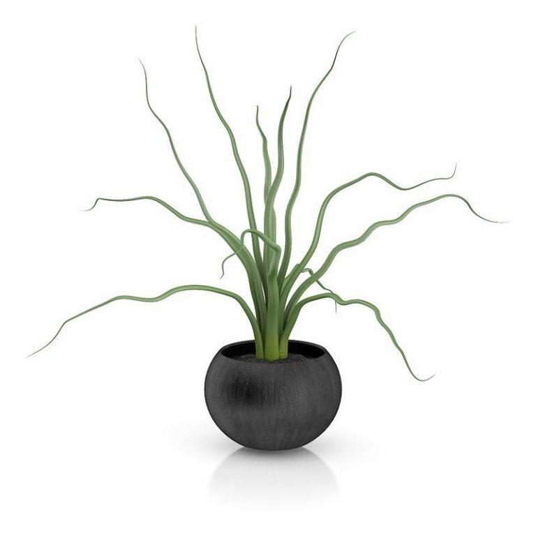 景观装饰盆栽植物C4D模型