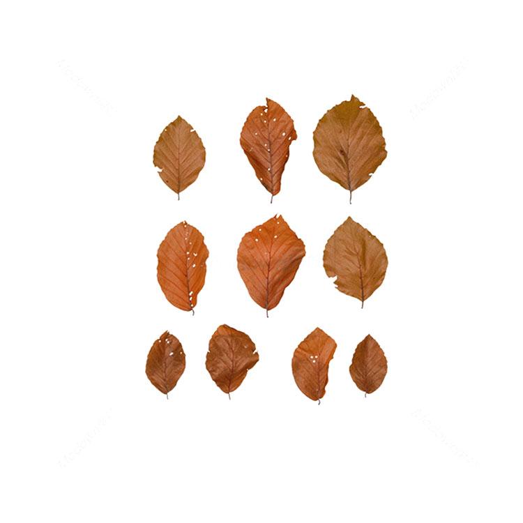 干棕叶树叶叶子贴图树叶