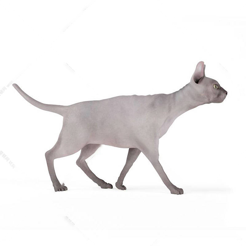 动物模型猫模型