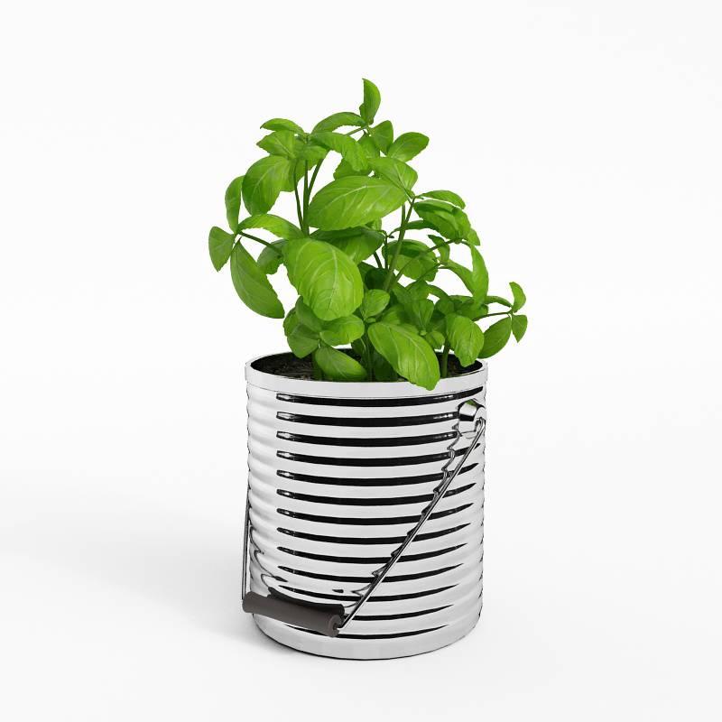 盆栽植物蔬菜C4D模型