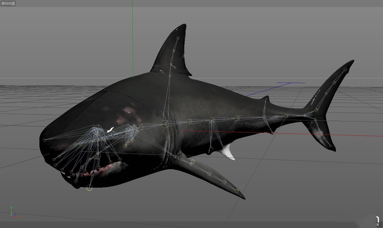 深海大鲨鱼生物动物大白鲨c4d模型