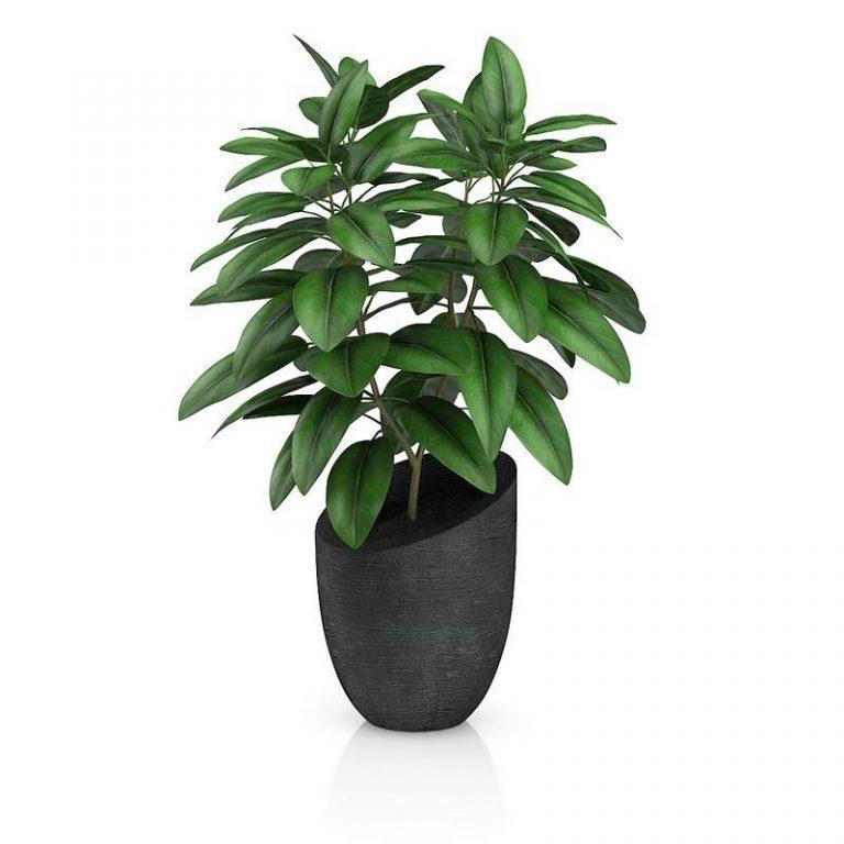 景观花盆栽绿色植物C4D模型
