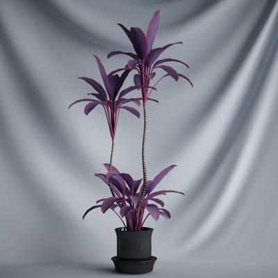 盆栽花变叶木植物C4D模型
