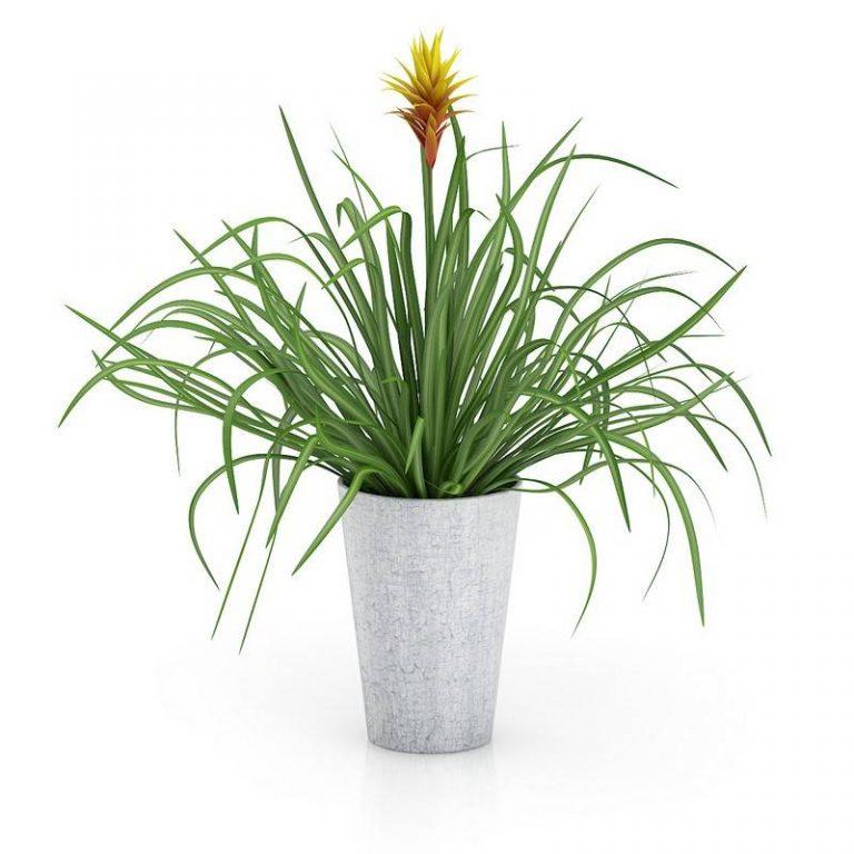 景观装饰盆栽绿植物C4D模型