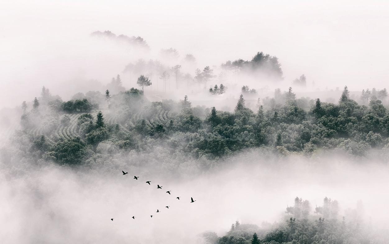 中国风壮观森林景背景墙电视柜客厅书房寝室卧室
