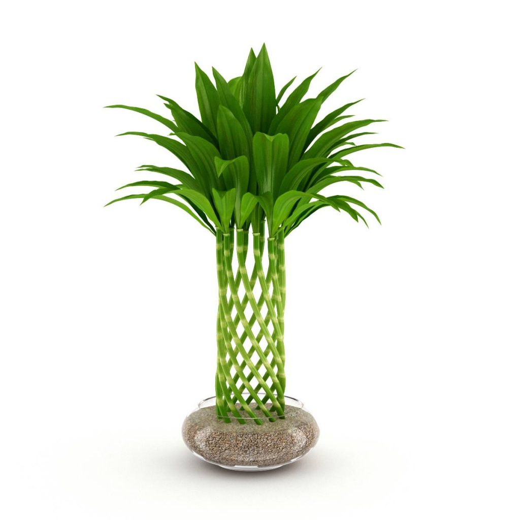 景观装饰盆栽植物富贵竹C4D模型