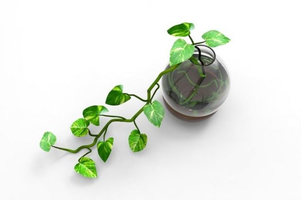 盆栽绿萝花卉植物3D模型