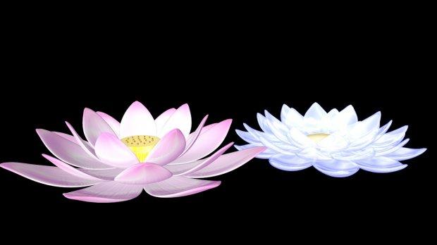 莲花荷花植物3D模型