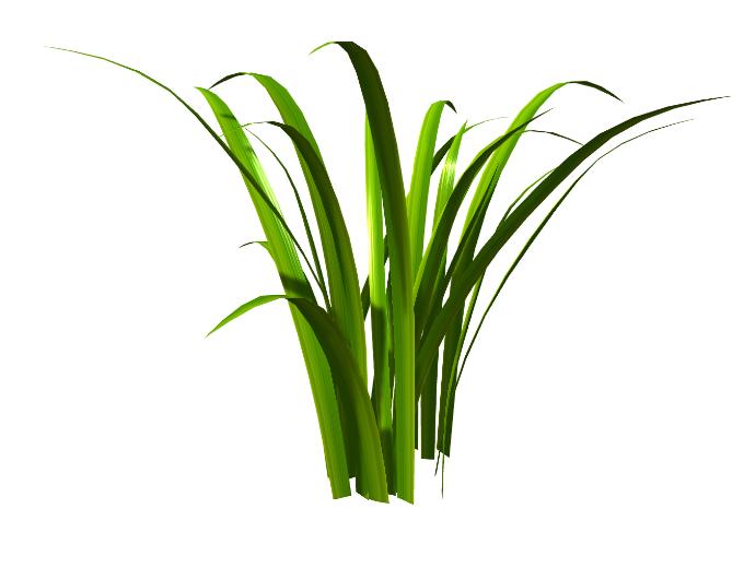 青草 草坪 牧草 3D模型